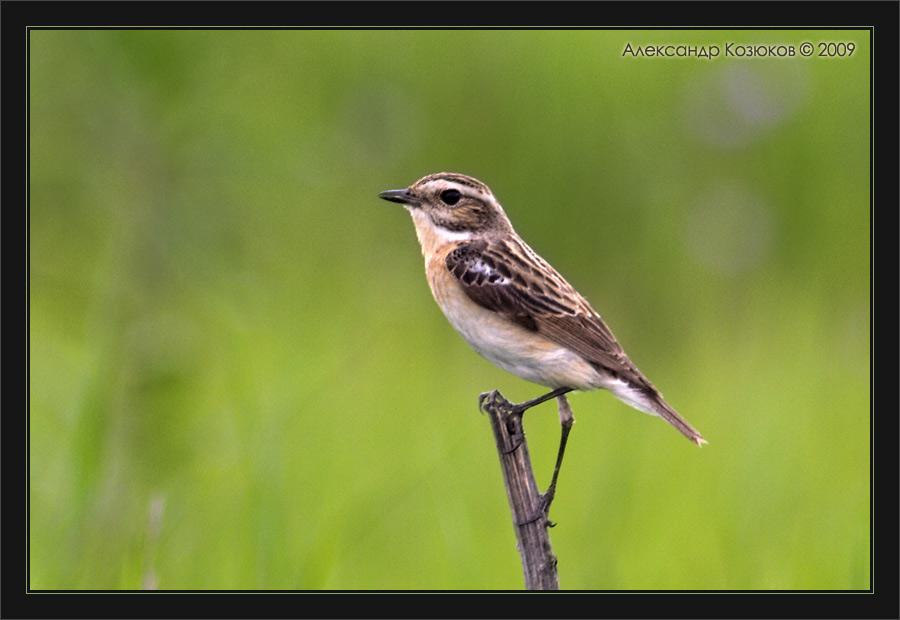 Фотографии птиц России.